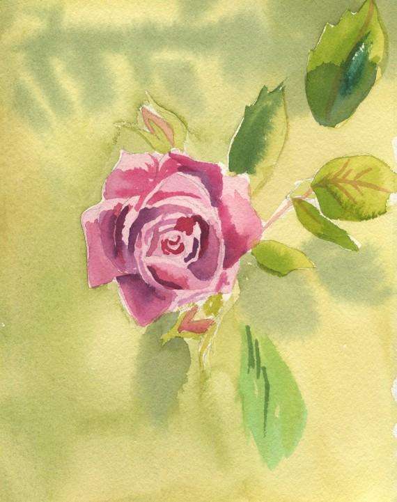 Rose WEB